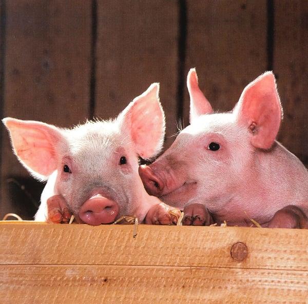Tierwohl: Beeinflusst die moralische Haltung die Zahlungsbereitschaft?
