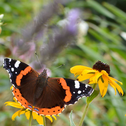 image Beiträge und Publikationen zum Thema Garten und nachhaltig Gärtnern