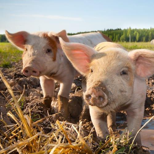 image Beiträge und Publikationen zum Thema ökologische Landwirtschaft