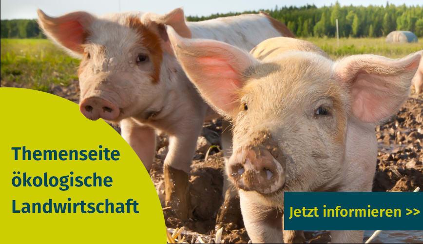 Themenseite zur ökologischen Landwirtschaft mit Publikationen und Artikeln