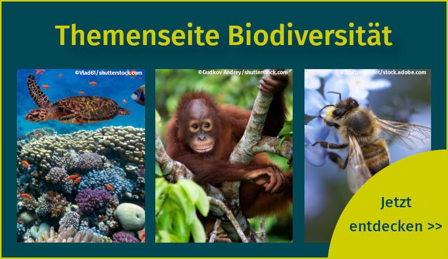Publikationen und Artikel zum Thema Biodiversität und Artenvielfalt auf unserer Themenseite