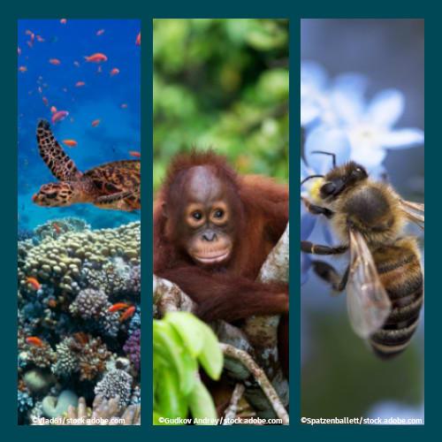 image Publikationen und Artikel zum Thema Biodiversität und Artenvielfalt auf unserer Themenseite