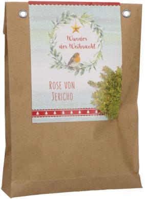 Wunder der Weihnacht - Rose von Jericho