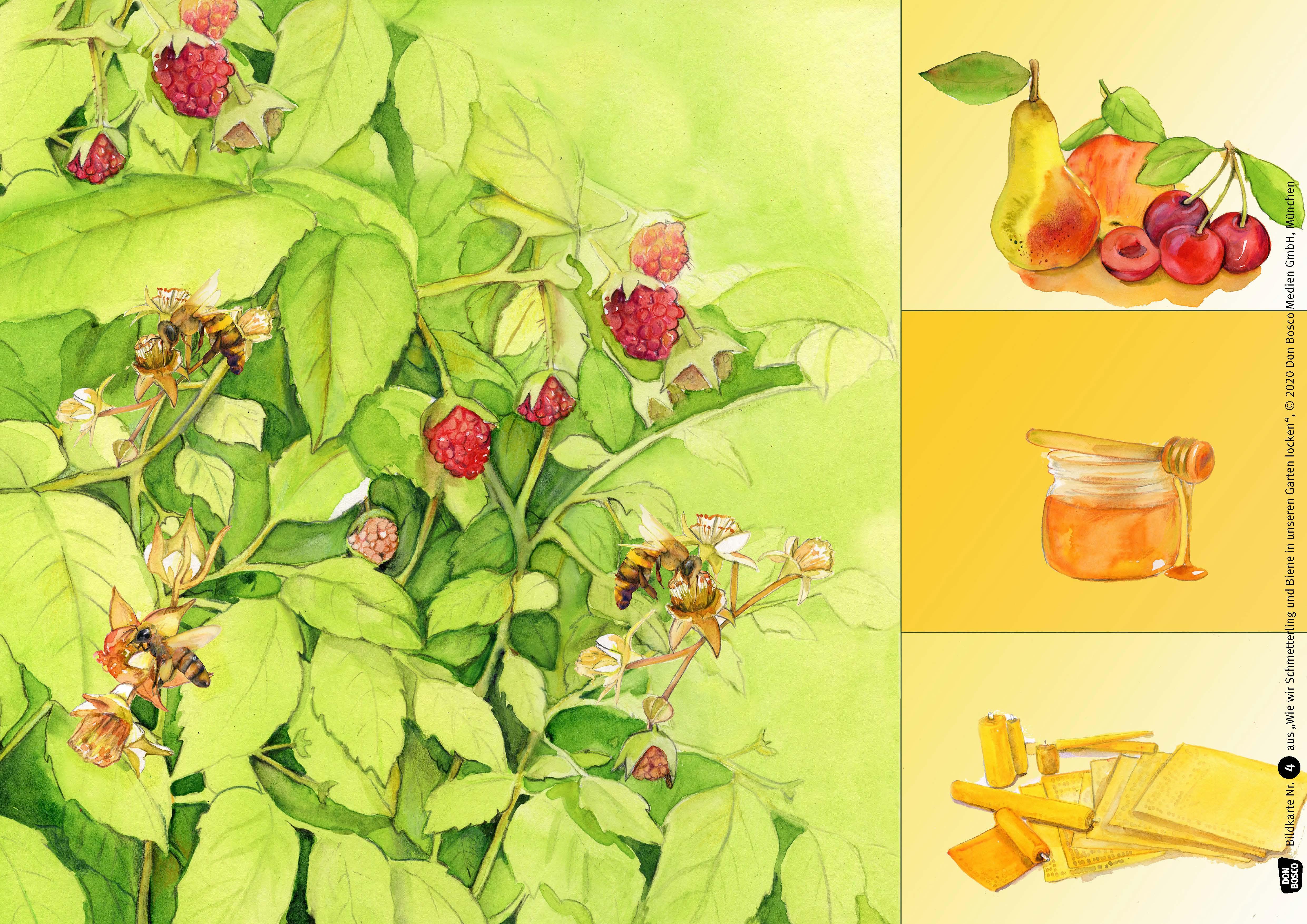 Innenansicht zu Wie wir Schmetterling und Biene in unseren Garten locken. Kamishibai Bildkartenset.