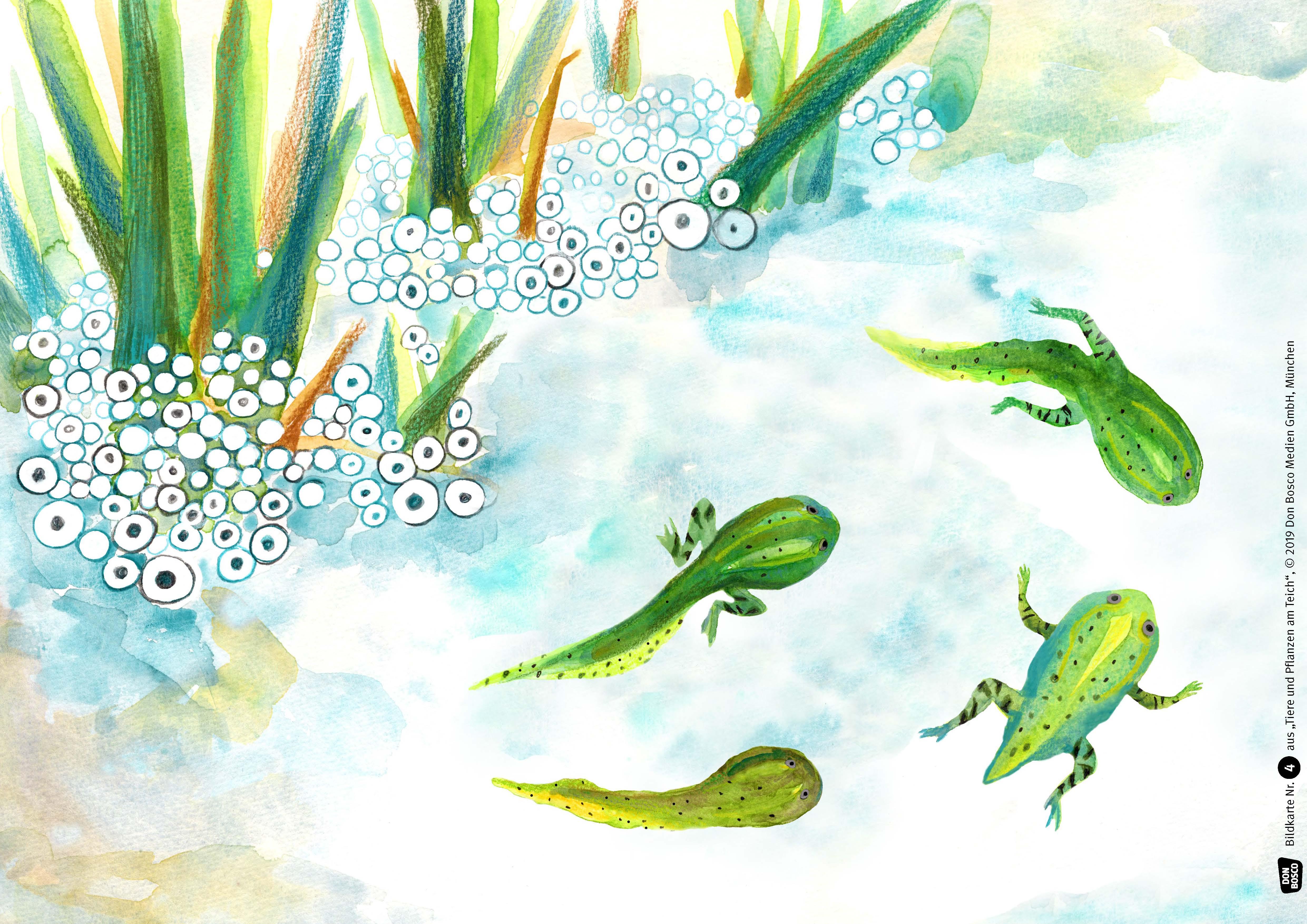 Innenansicht zu Tiere und Pflanzen am Teich. eKami.