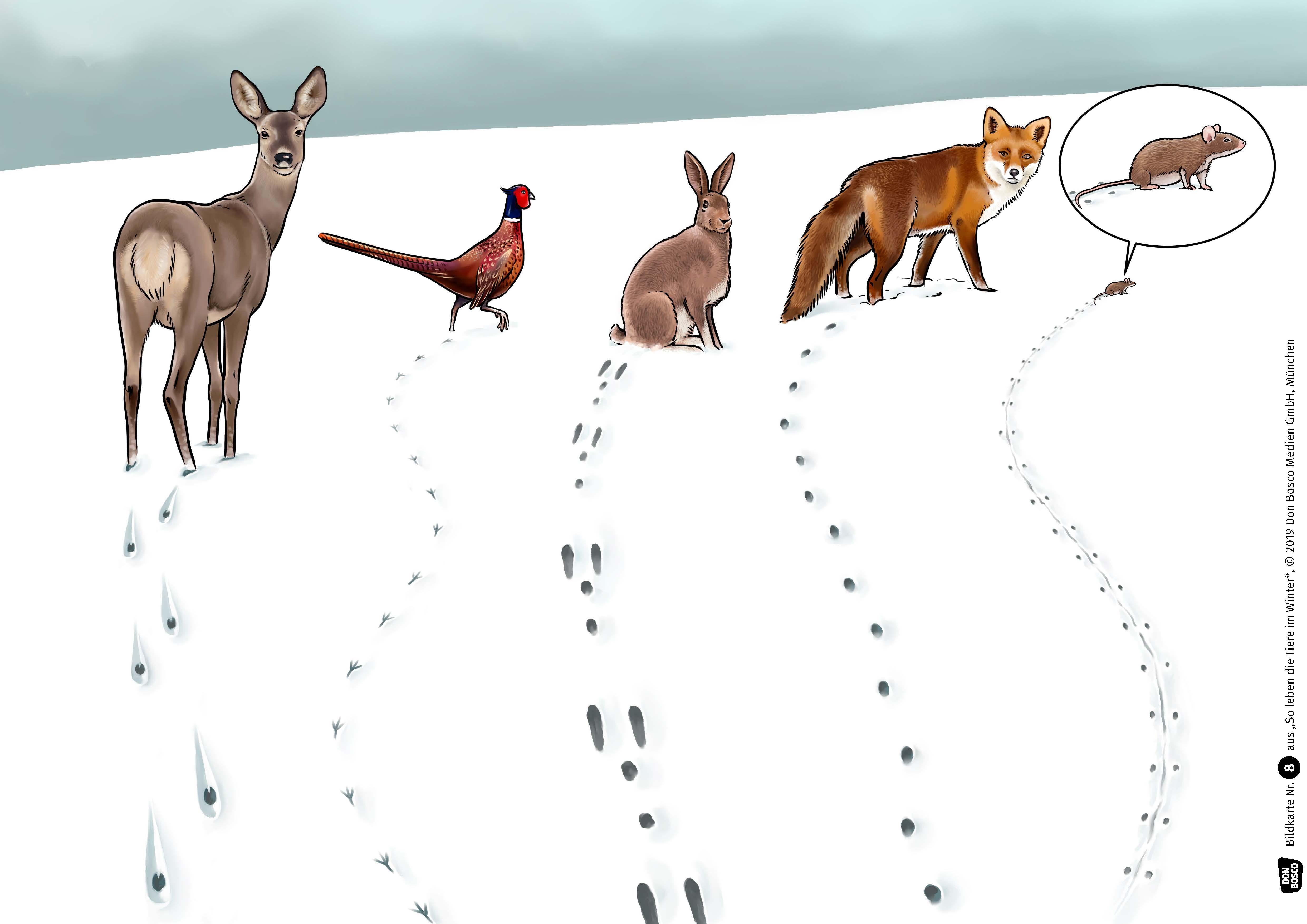 Innenansicht zu So leben die Tiere im Winter. eKami.