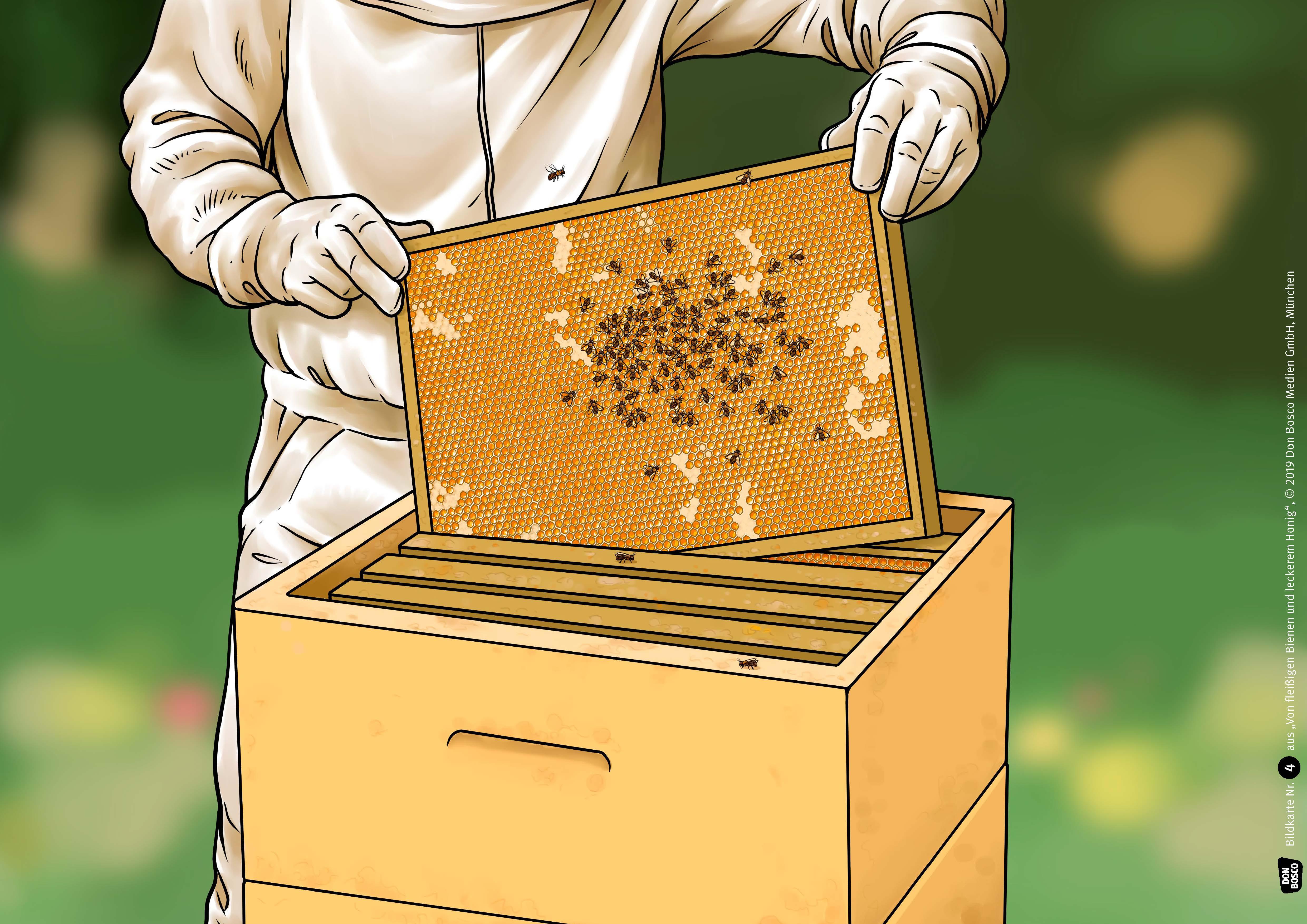 Innenansicht zu Von fleißigen Bienen und leckerem Honig. eKami.