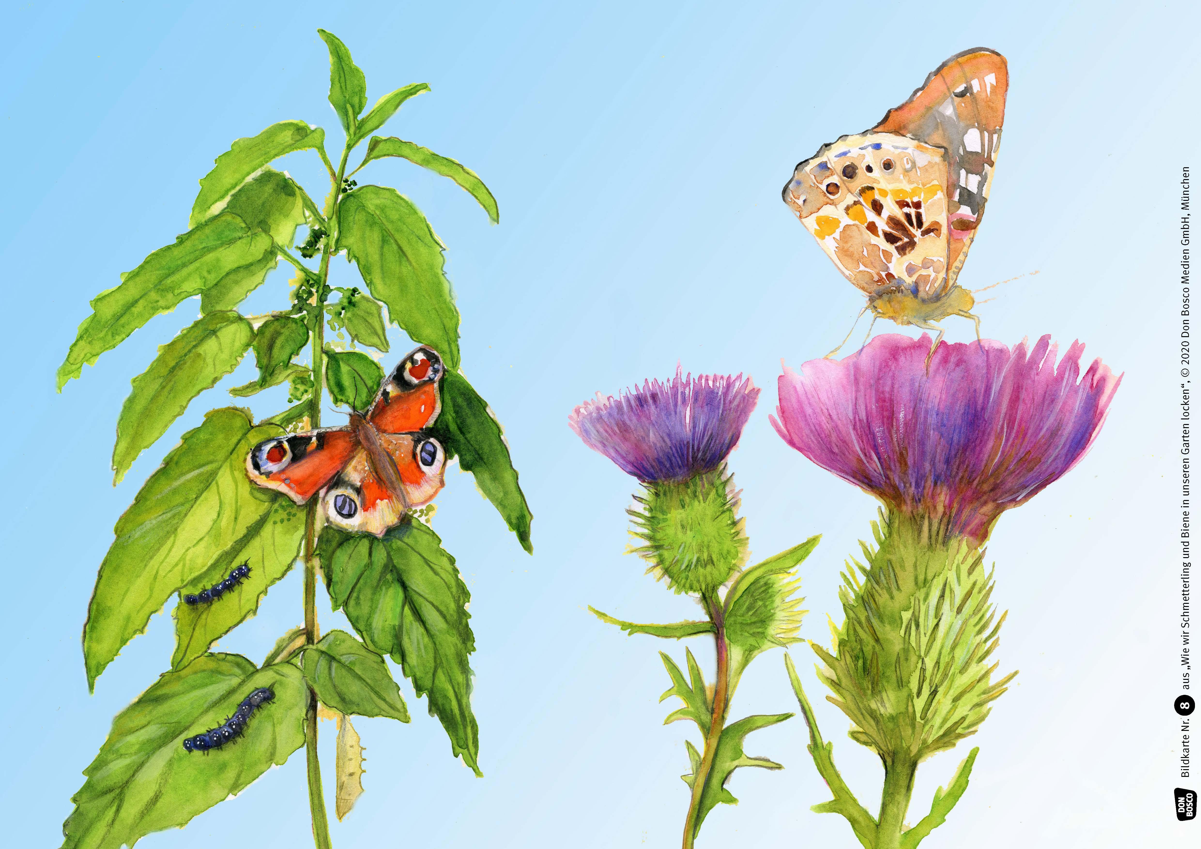Innenansicht zu Wie wir Schmetterling und Biene in unseren Garten locken. eKami.