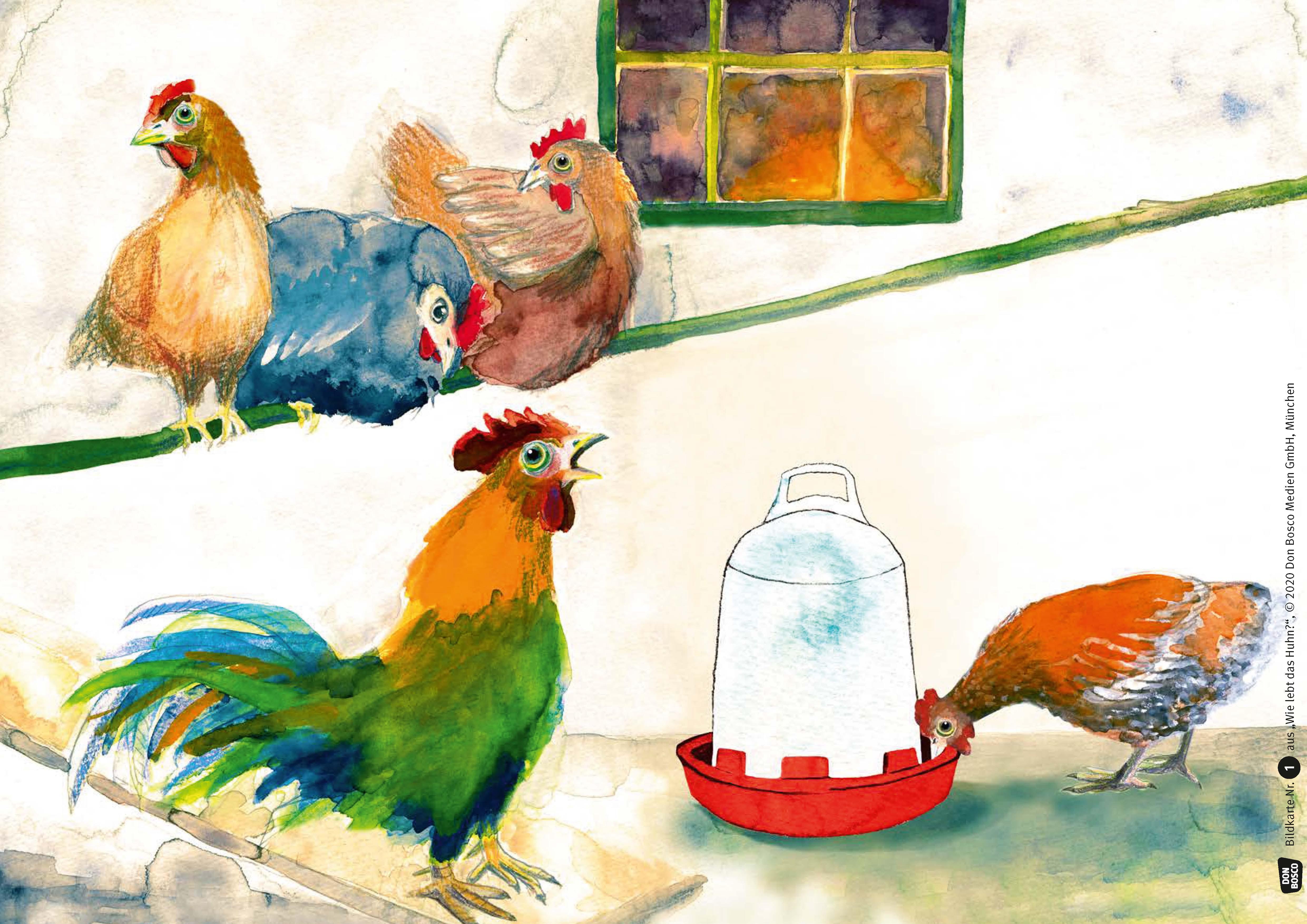 Innenansicht zu Wie lebt das Huhn? Kamishibai Bildkartenset.