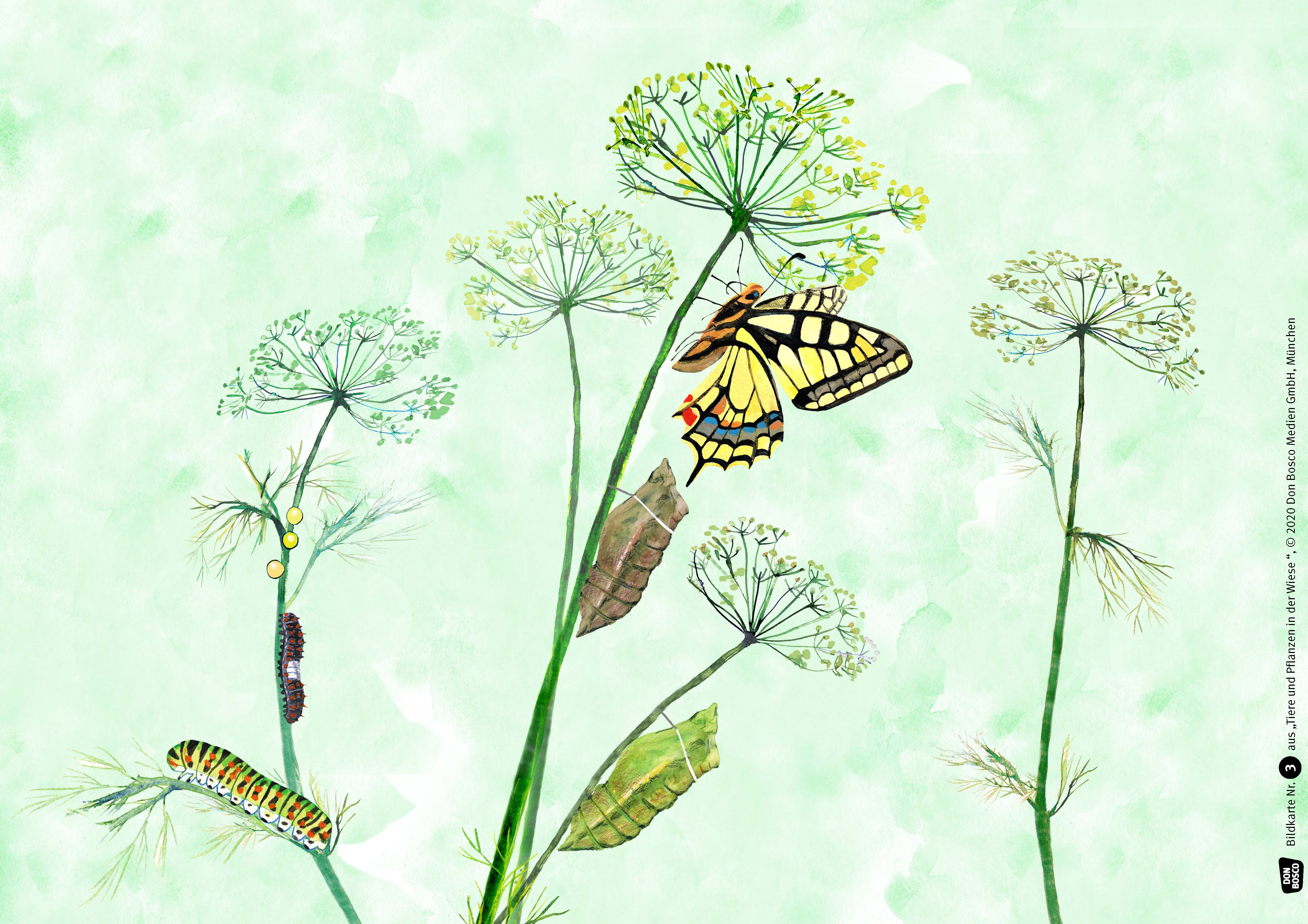 Innenansicht zu Tiere und Pflanzen in der Wiese. Kamishibai Bildkartenset.