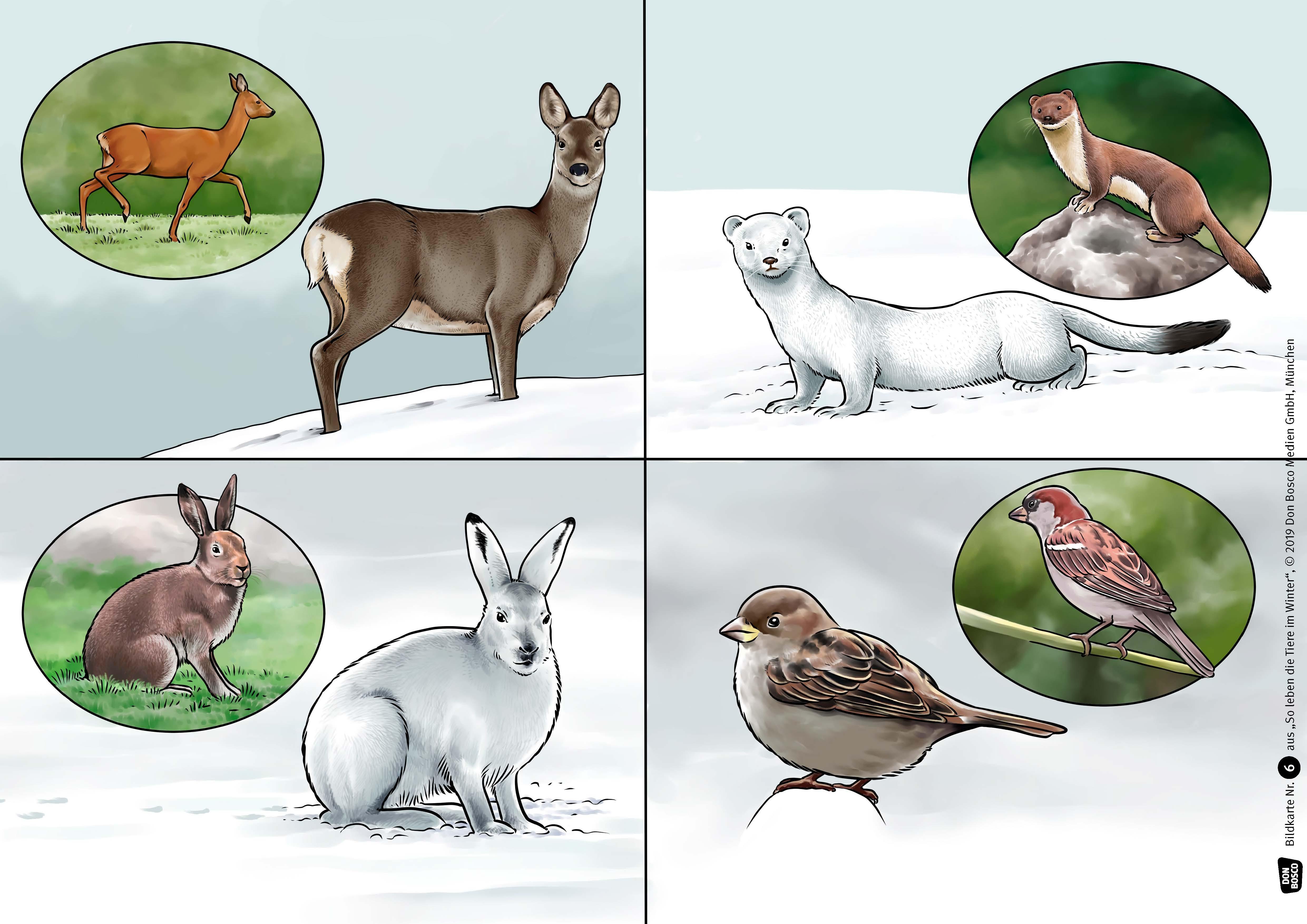 Innenansicht zu So leben die Tiere im Winter. Kamishibai Bildkartenset.