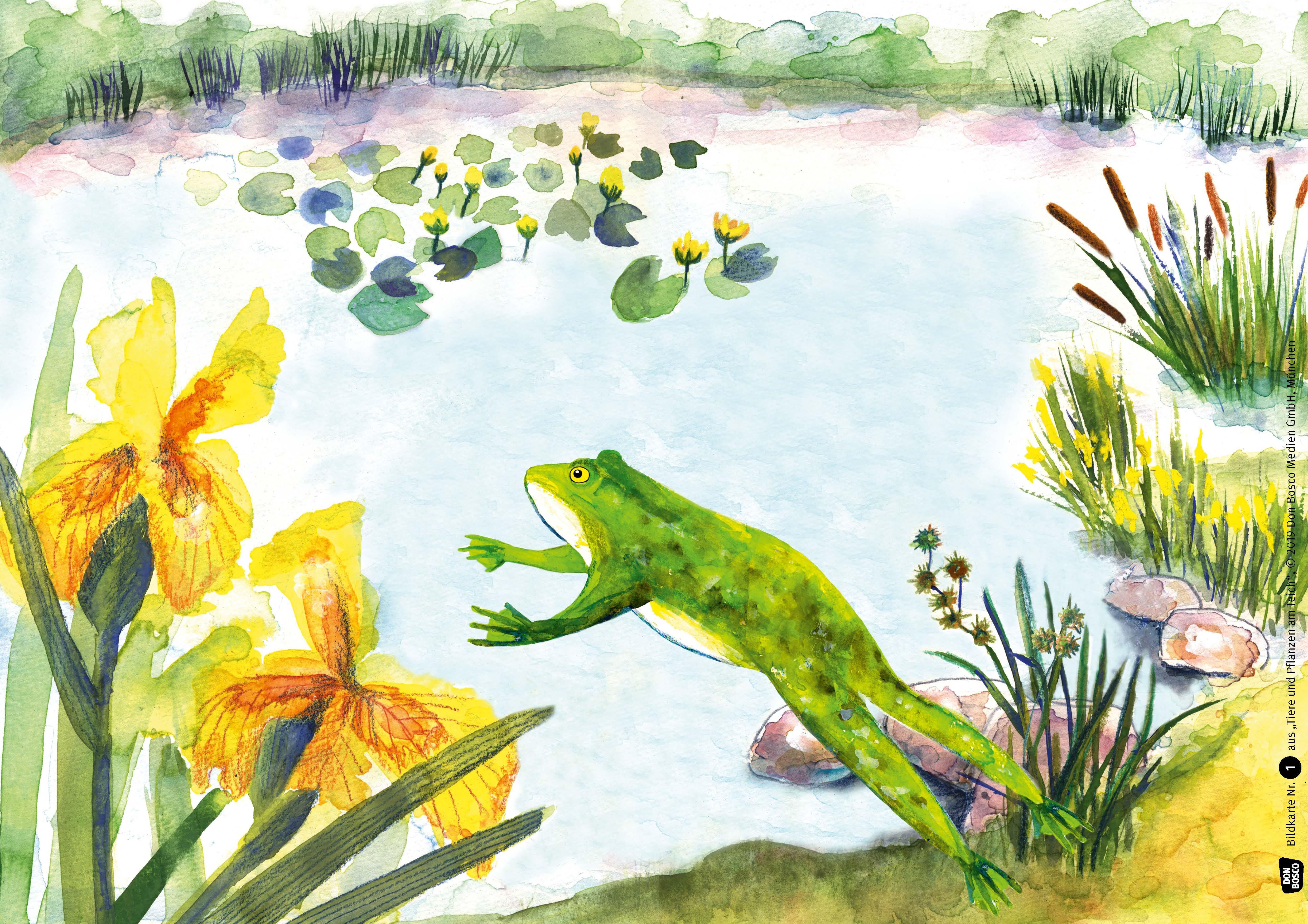 Innenansicht zu Tiere und Pflanzen am Teich. Kamishibai-Bildkartenset.