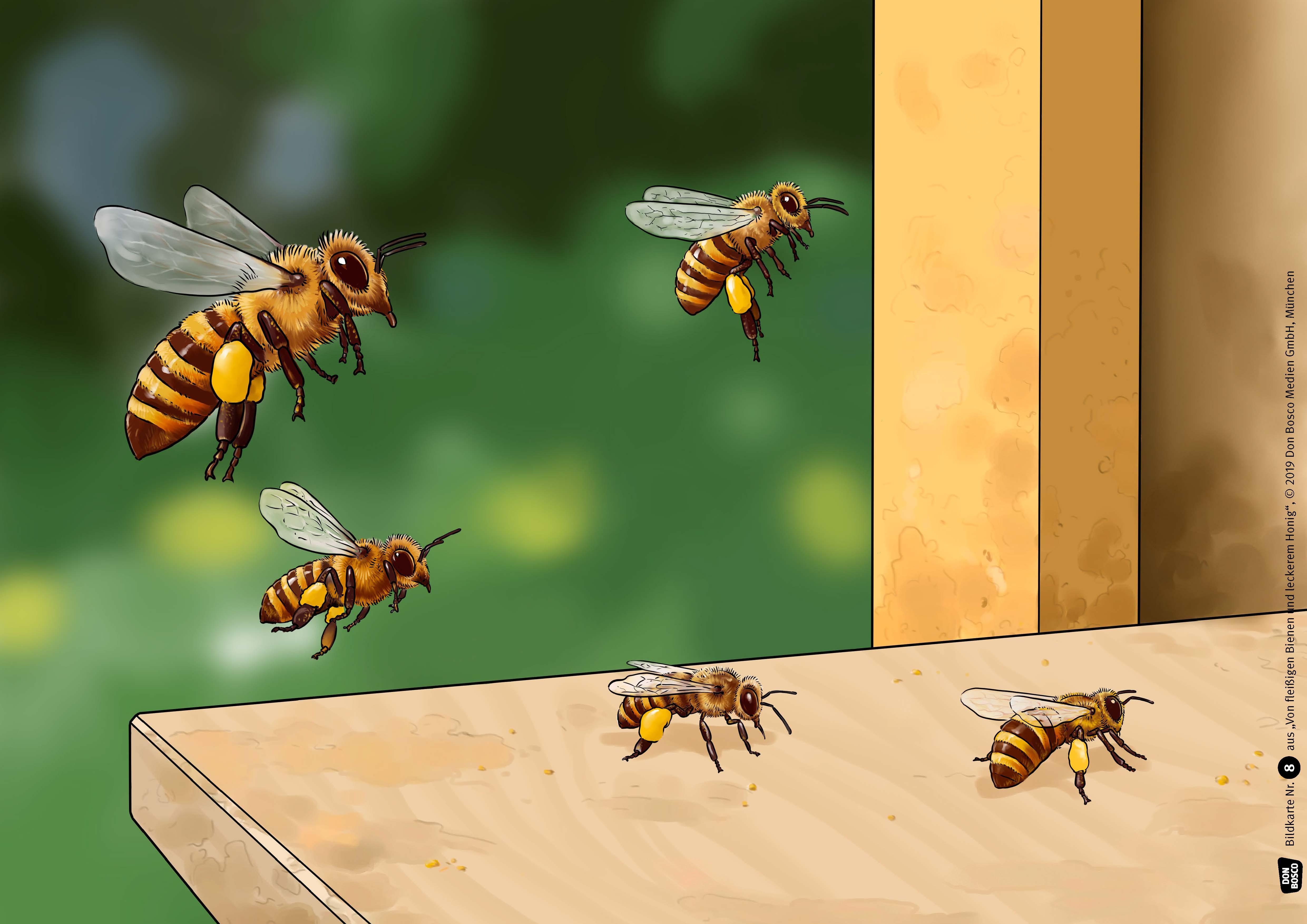 Innenansicht zu Von fleißigen Bienen und leckerem Honig. Kamishibai Bildkartenset.