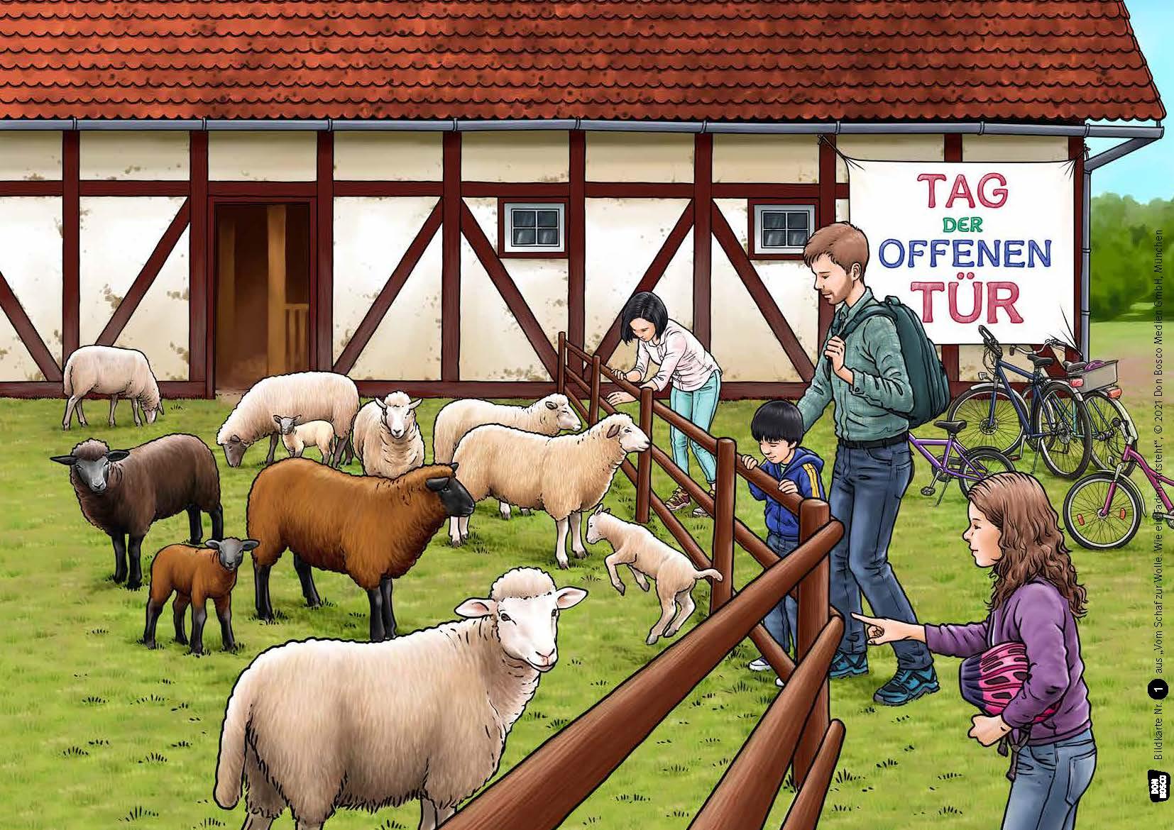 Innenansicht zu Vom Schaf zur Wolle. Wie ein Faden entsteht. Kamishibai Bildkartenset.