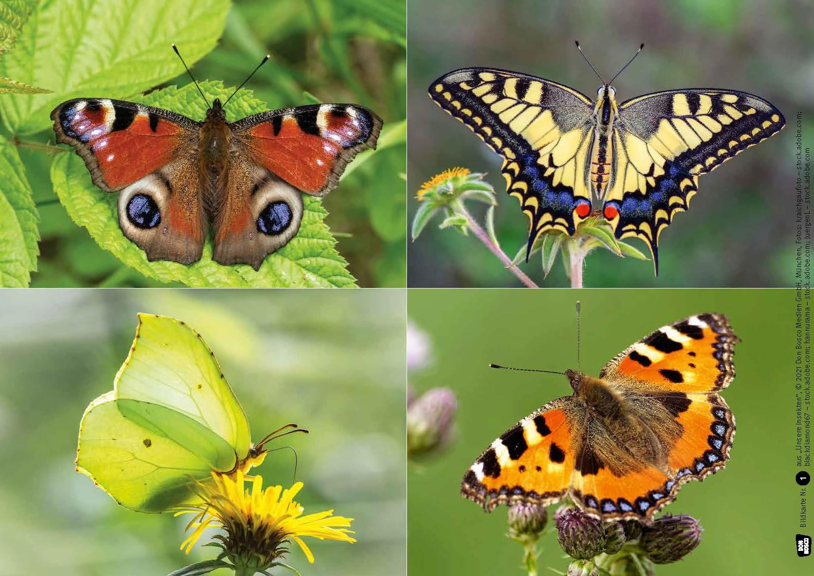 Innenansicht zu Ameise, Biene und Schmetterling. Unsere Insekten. Kamishibai Bildkarten und Memo-Spiel