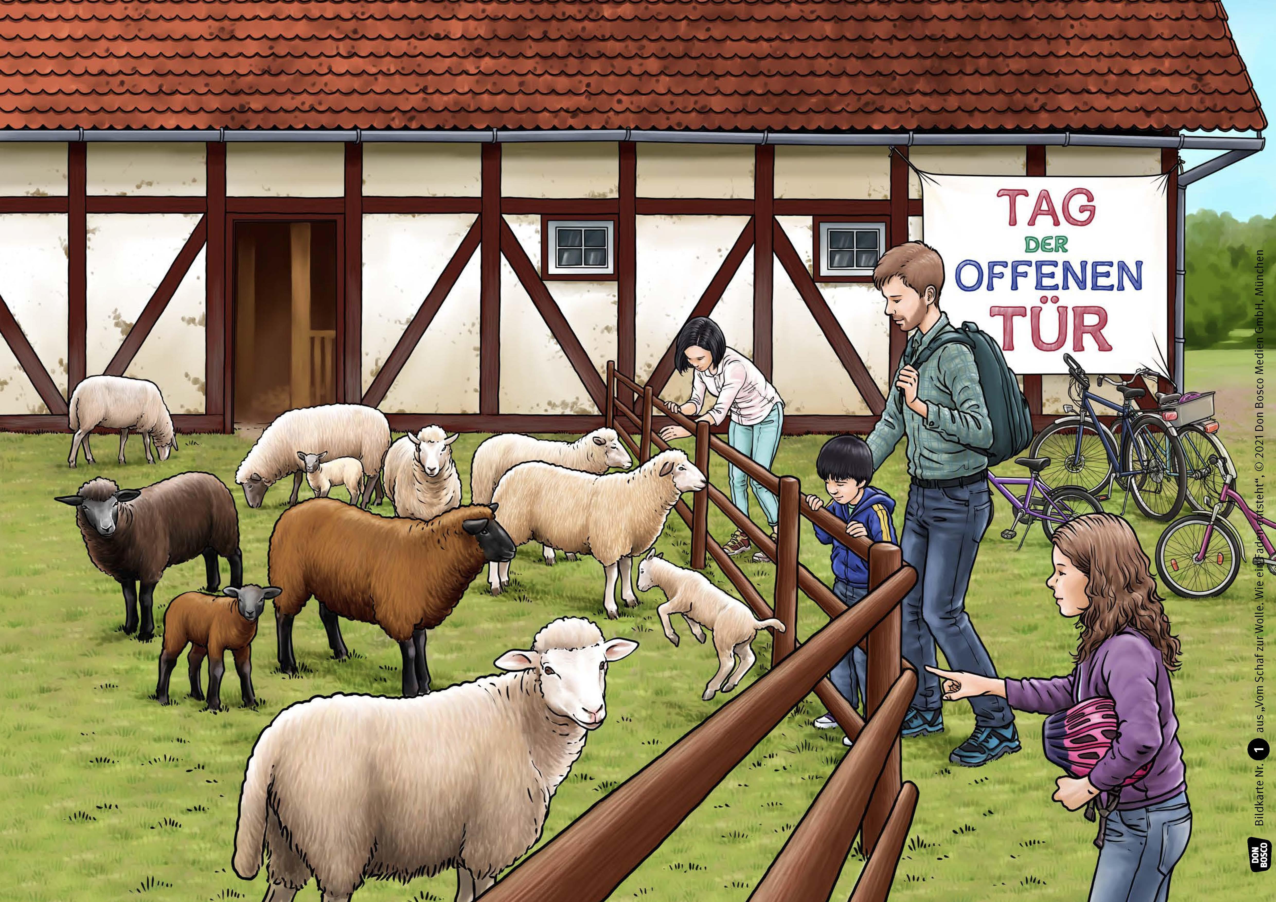 Innenansicht zu Vom Schaf zur Wolle. Wie ein Faden entsteht. eKami.