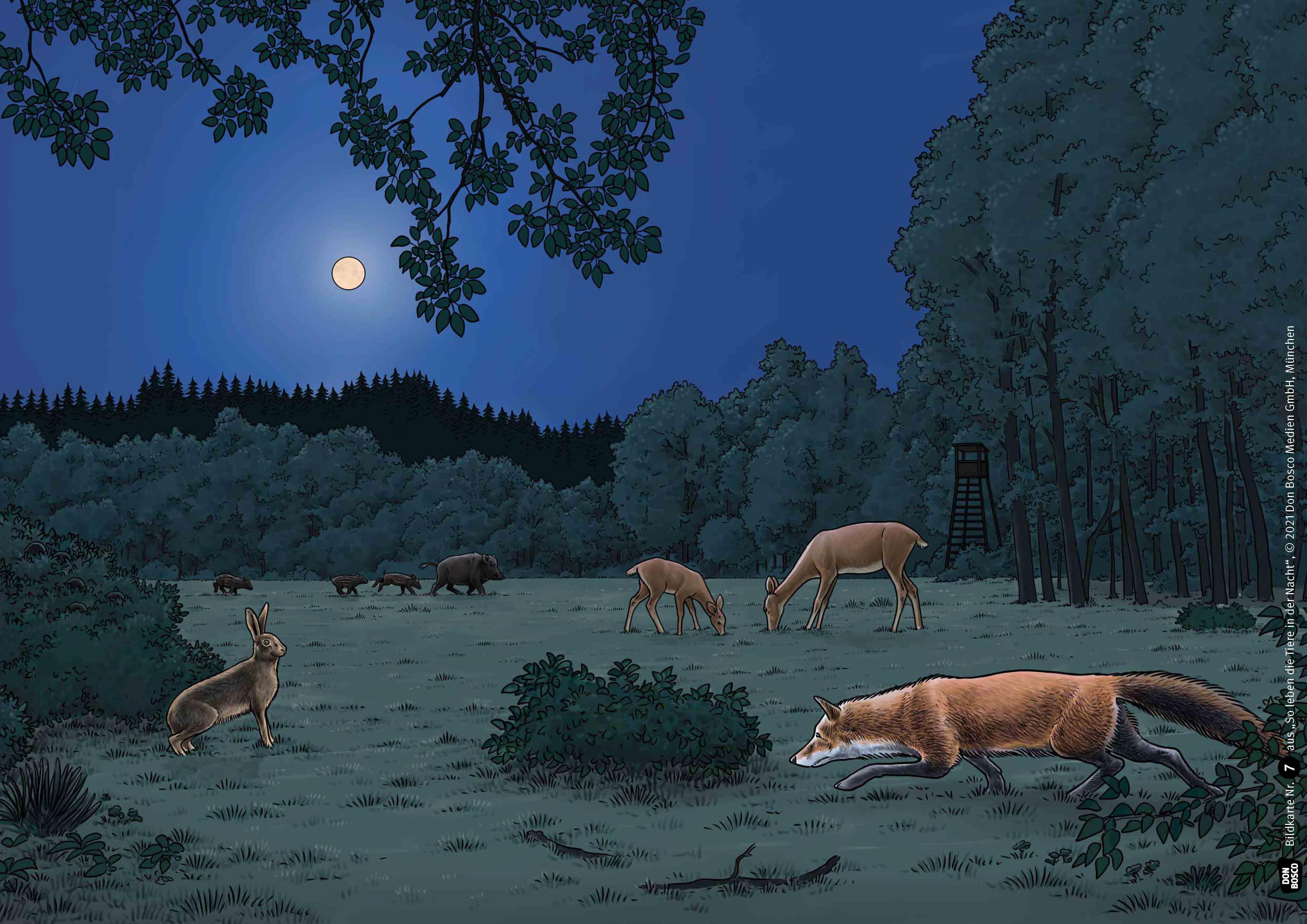 Innenansicht zu So leben die Tiere in der Nacht. Kamishibai Bildkartenset