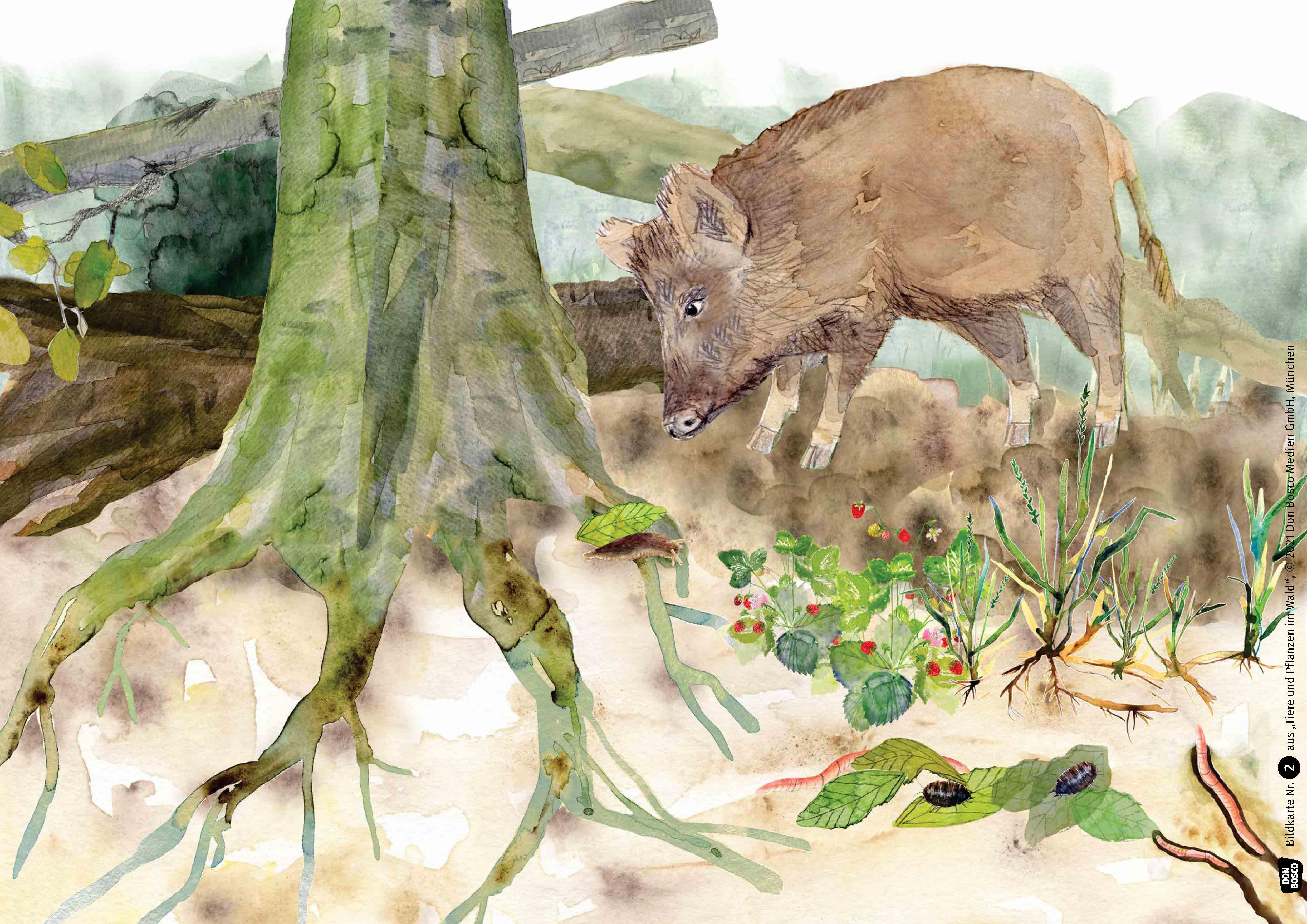 Innenansicht zu Tiere und Pflanzen im Wald. Kamishibai Bildkartenset
