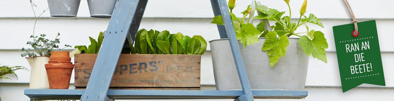 DK Verlag - Haus & Garten