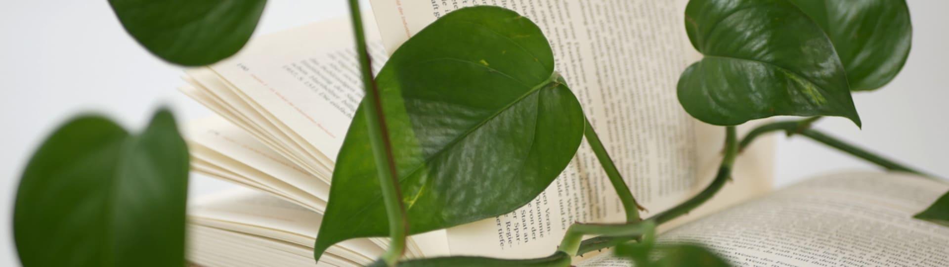 Grüne Pflanze rankt sich um die Inhalte der oekom Bücher