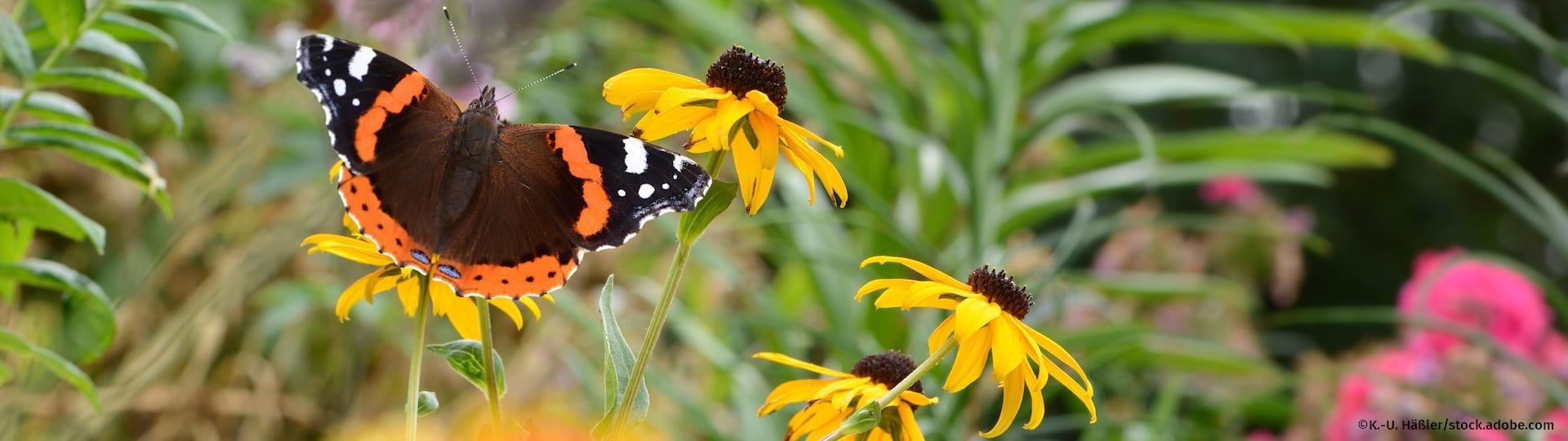 Garten mit buntem Schmetterling auf gelber Blume