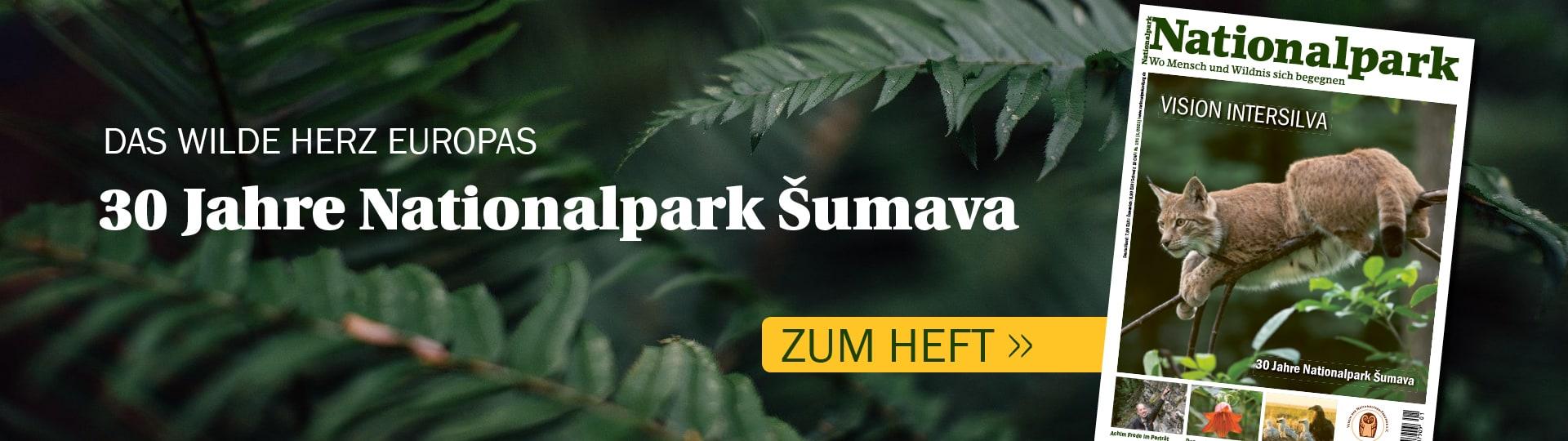 In der neuen Ausgabe von Nationalpark geht es um den Nationalpark Šumava in Tschechien.