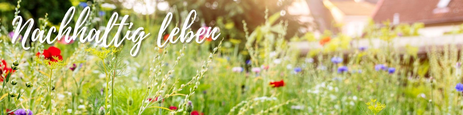 Rubrik Nachhaltig leben, Wildblumenwiese