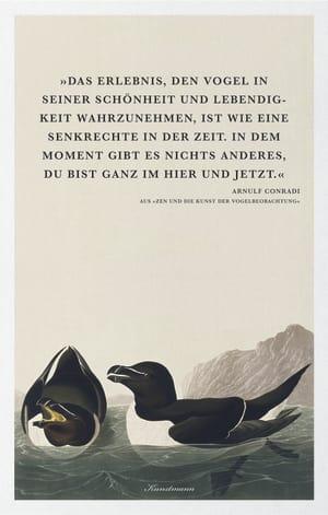 Cover Dekoplakat Arnulf Conradi – Zen und die Kunst der Vogelbeobachtung