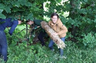 oekom Mitarbeiter:innen holen Äste aus dem Gebüsch