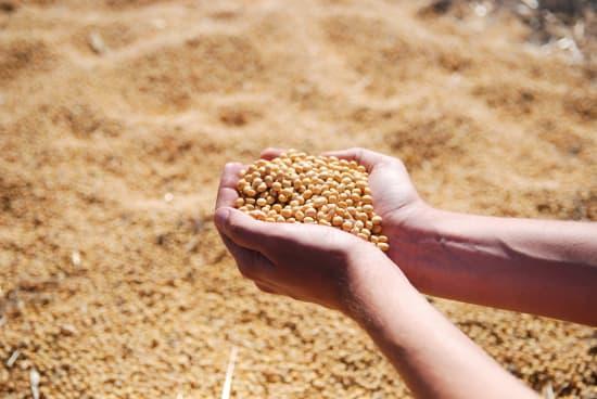 Engagiert sich die Bundesregierung genug beim Eiweißpflanzenanbau?