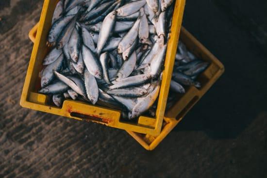 Mikroplastik in Fischerzeugnissen