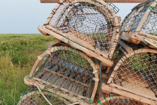 Verbot von weltweitem Wildtierhandel gefordert