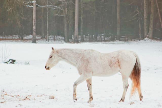 insidethecove%2Fsnow-day-white-horse