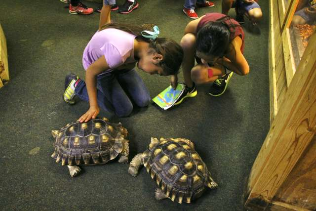 iws-critterclass-turtle-13IWS-Dickinson-2-253_haidey