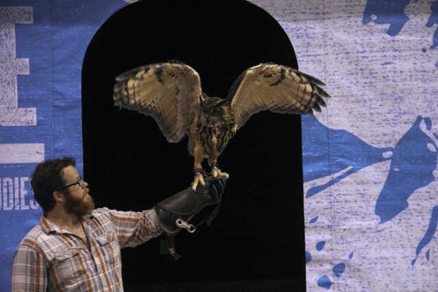 IWS-2013-Airborne-Owl
