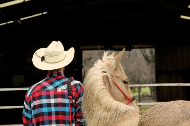 Wrangler with Horse