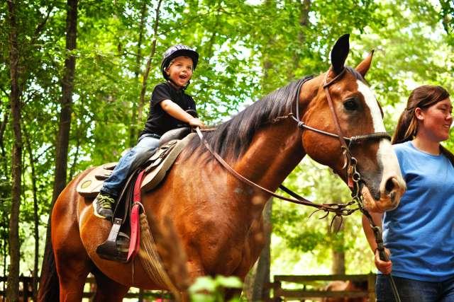 castlerock-horses-14CR06-05060_ncebqx.jpg