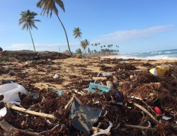 Plastics Usage: An area of concern