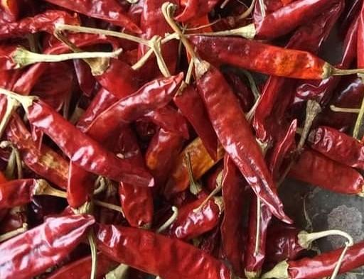 Red Chilli S17 Teja