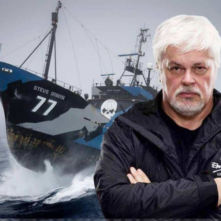 cover art for Captain Paul Watson, Sea Shepherd fighting the fight at sea