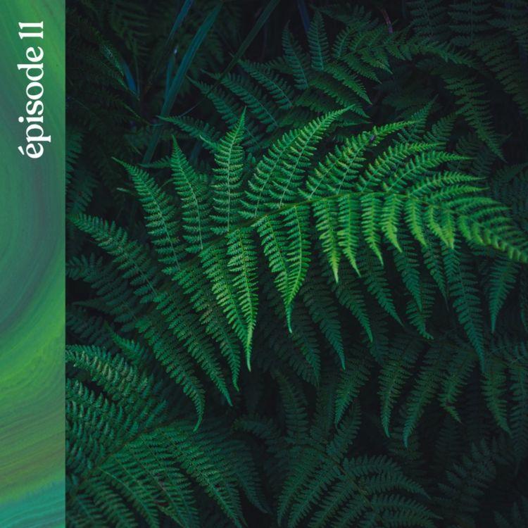 cover art for #11 — À la recherche des plantes sauvages de Nouvelle-Zélande, avec Vincent Piton
