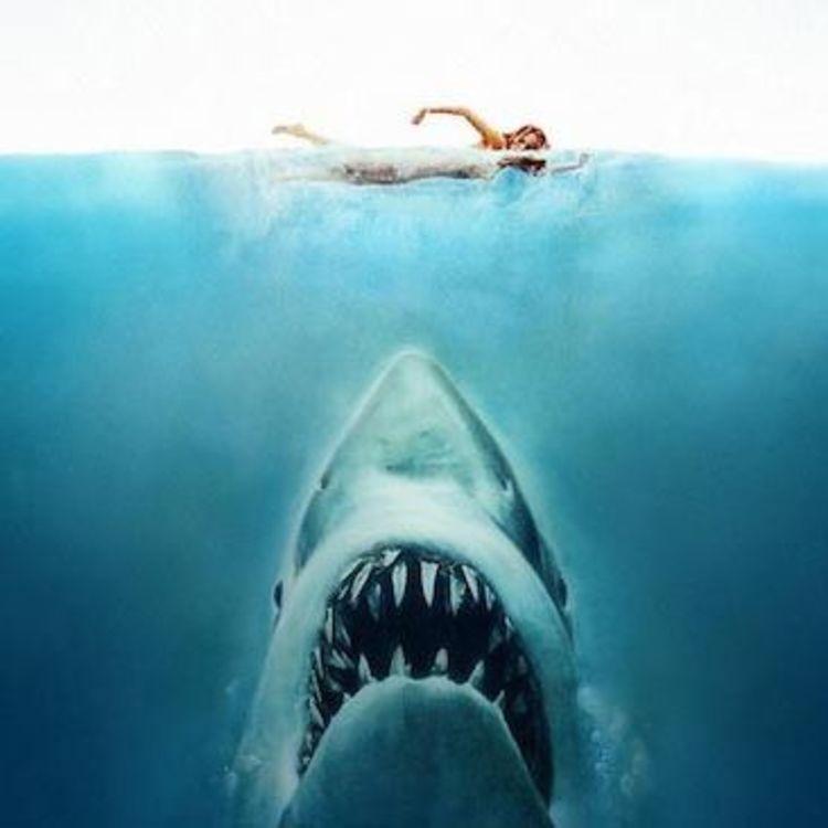 cover art for Défense de nager : Les films de requins.