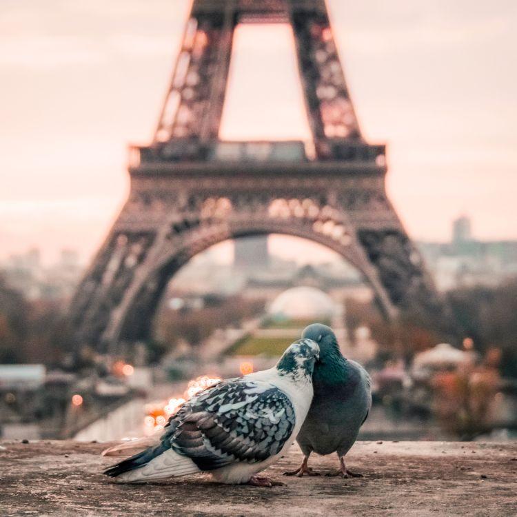 cover art for Paris fait son cinéma 2016