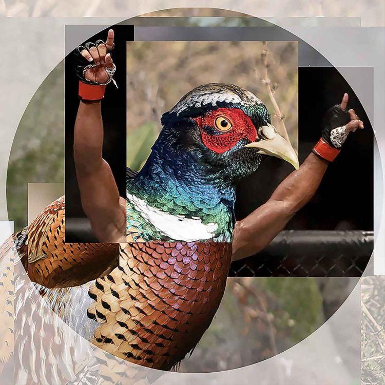 cover art for Pheasants