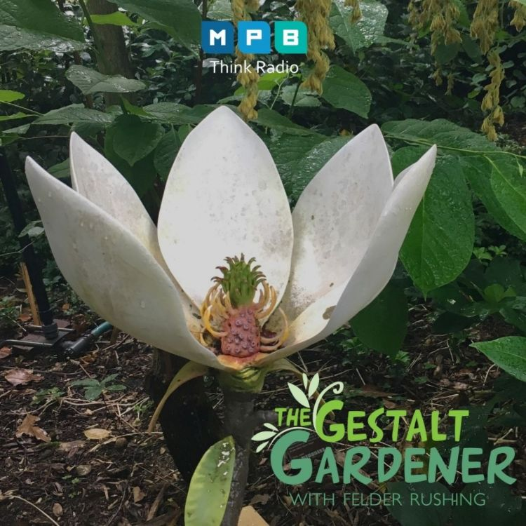 cover art for The Gestalt Gardener:  Hortus Botanicus