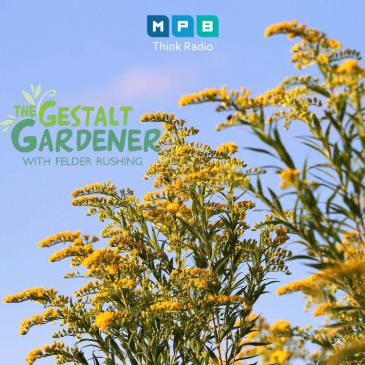 cover art for The Gestalt Gardener:  Golden Garden