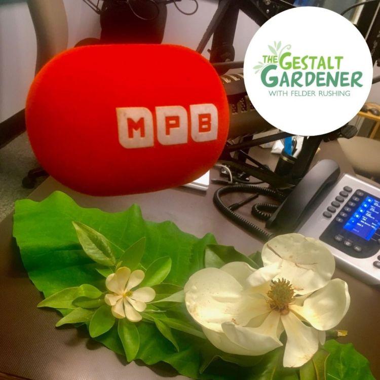cover art for The Gestalt Gardener:  3 Magnolias