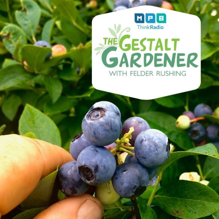 cover art for The Gestalt Gardener:  Tea Time