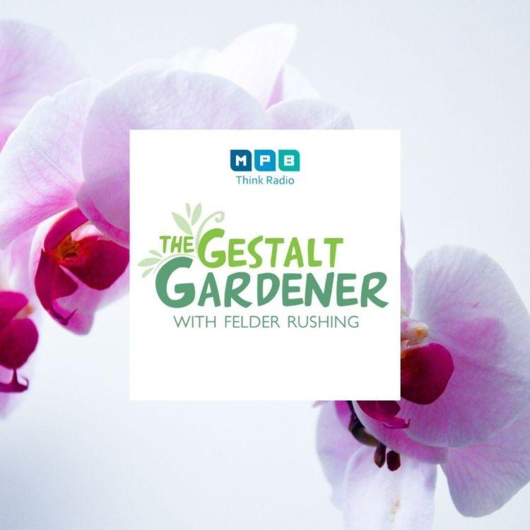 cover art for The Gestalt Gardener: Healing Garden