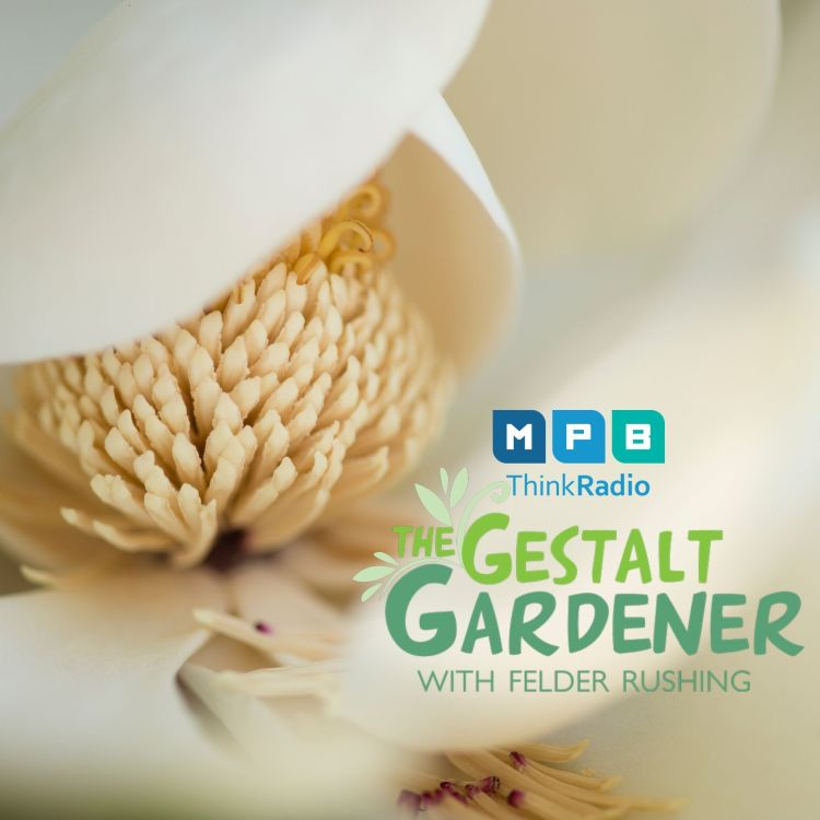 cover art for The Gestalt Gardener:  Mississippi Magnolia